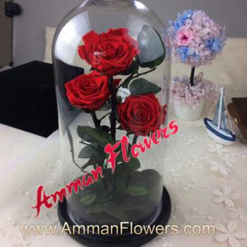 3 Immortal Roses فازه 3 ورود أسطورية