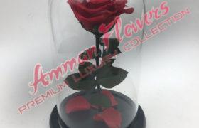 Immortal Flower الورده الاسطورية (لا تذبل)