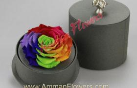 Colorful Immortal Flower w/Box الورده الاسطوريةالملونه مع بوكس (لا تذبل)